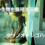CMにも登場したタツノオトシゴハウス!日本で唯一の観光できる養殖場